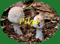 Linkbutton Pilze